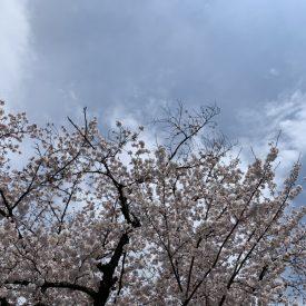 桜|吉祥寺・武蔵野市でリフォームするならONOYA東京 吉祥寺ショールーム