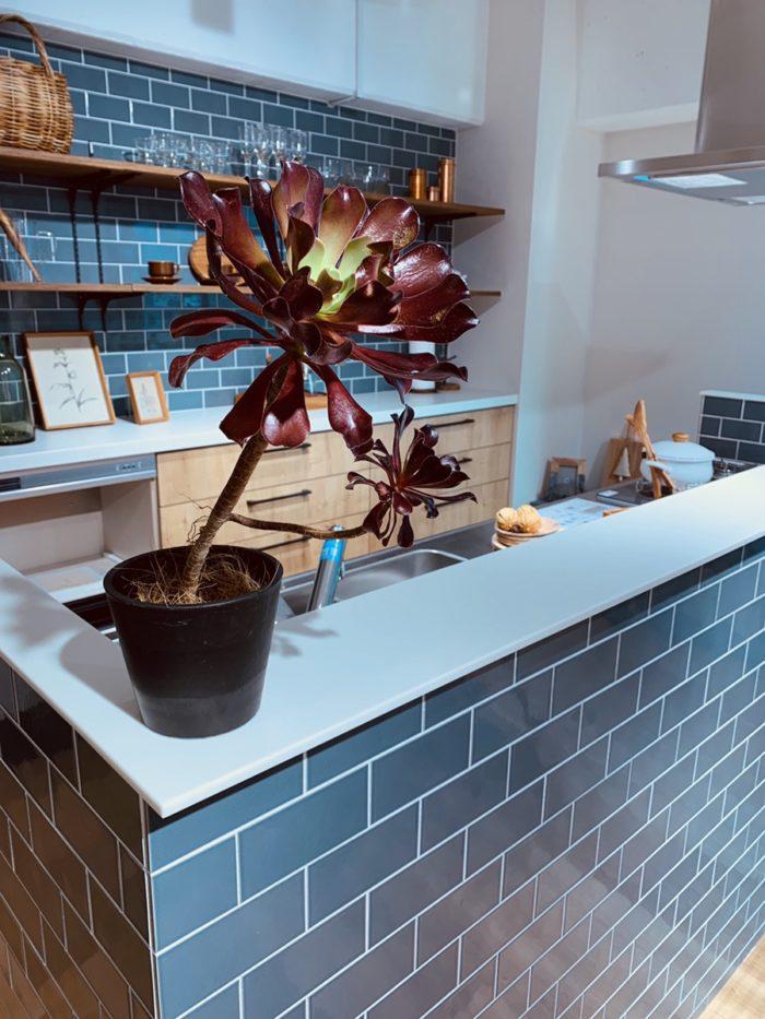 新しい植物|吉祥寺・武蔵野市でリフォームするならONOYA東京 吉祥寺ショールーム