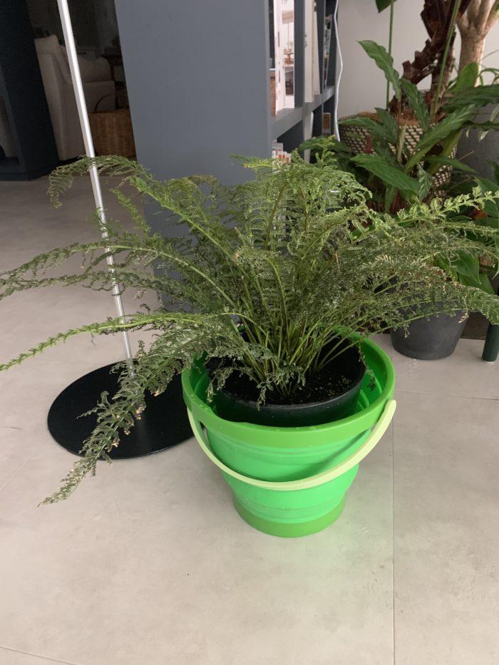 復活したショールームの植物|吉祥寺・武蔵野市でリフォームするならONOYA東京 吉祥寺ショールーム