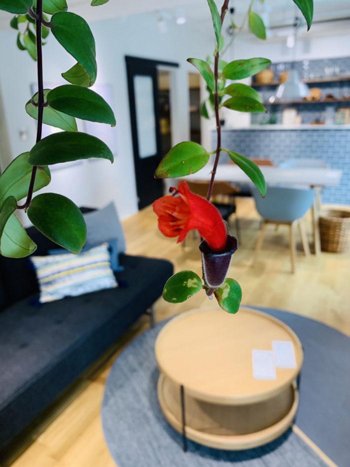 ONOYA東京 吉祥寺ショールーム 赤い花|吉祥寺・武蔵野市でリフォームするならONOYA東京 吉祥寺ショールーム